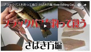 魚をさばく(ブラックバス)